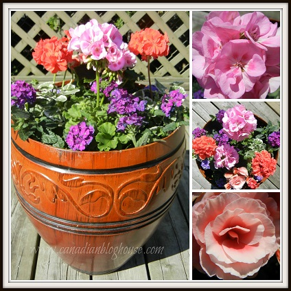 CanadianBlogHouseFlowers