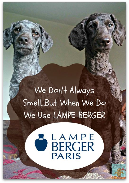 Dogs Vs. Lampe Berger: The Taming Of The Stink