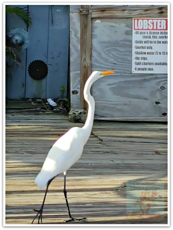 critters and creatures Florida Keys Bird White
