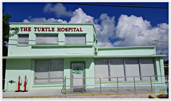 Turtle Hospital Marathon Florida