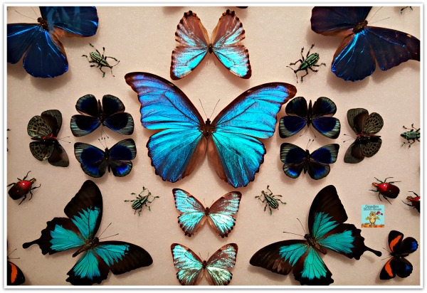 BeautifulButterflies