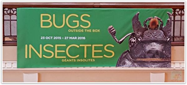 BugsOutsideTheBox