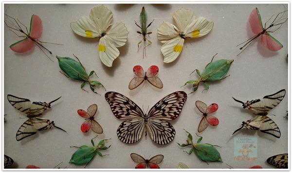 ButterfliesandBugs