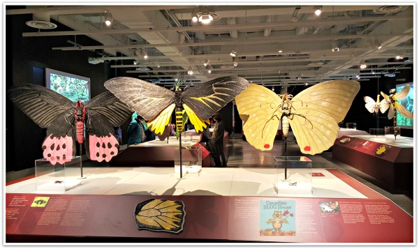ButterflyDisplay