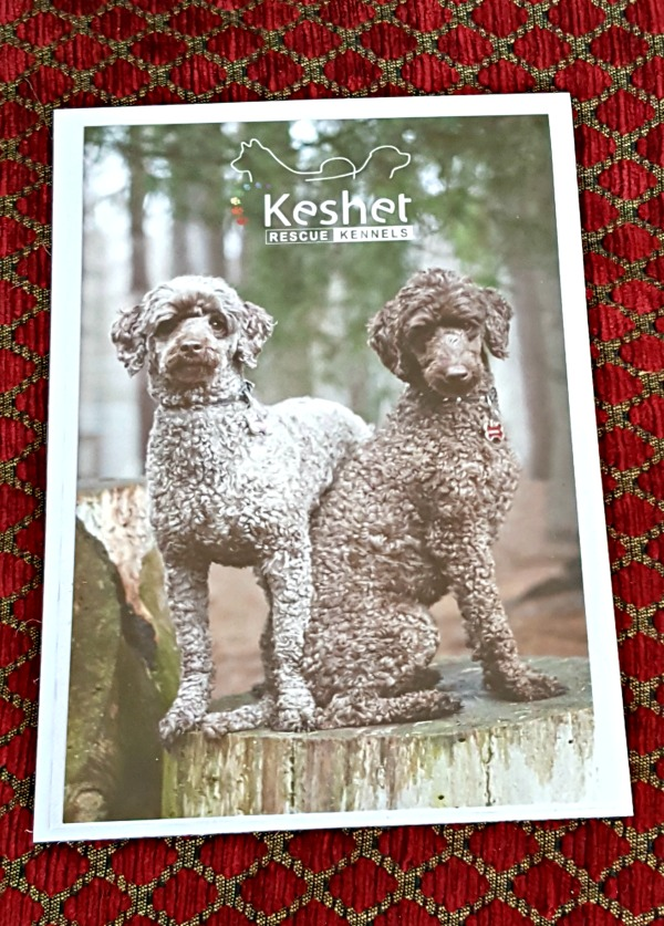 Keshet Rescue Kennels – An Ottawa Vacation For Your Dog!