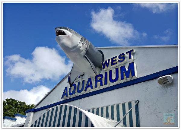 Key West Aquarium in Quaint and Quirky Key West