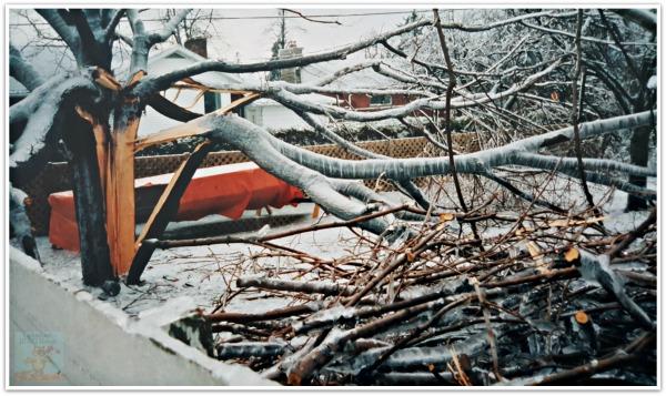 Ice Storm 1998 damage