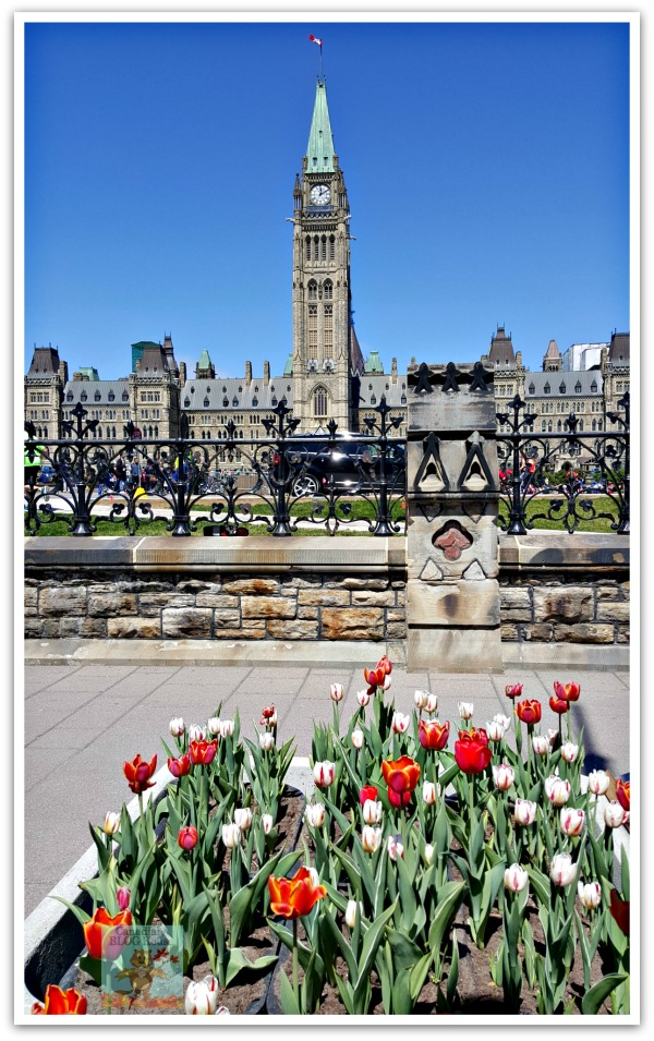 Tulips in front of Parliament Hill