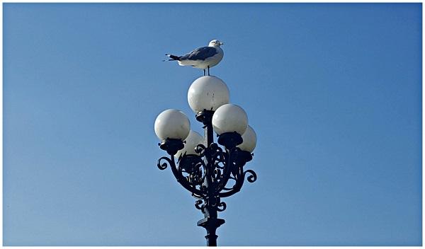 Seagull Parliament Hill Ottawa