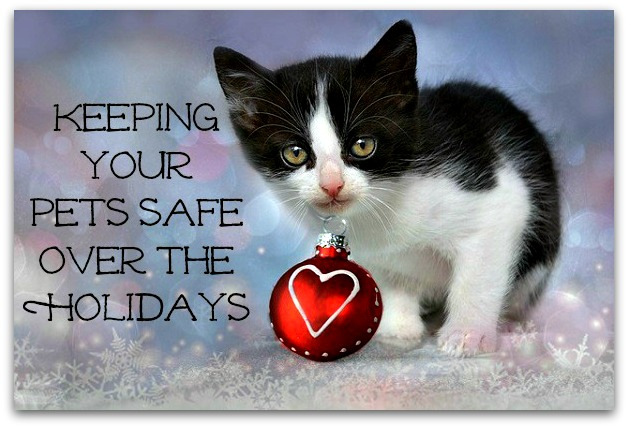 Pets Safe Over Holidays