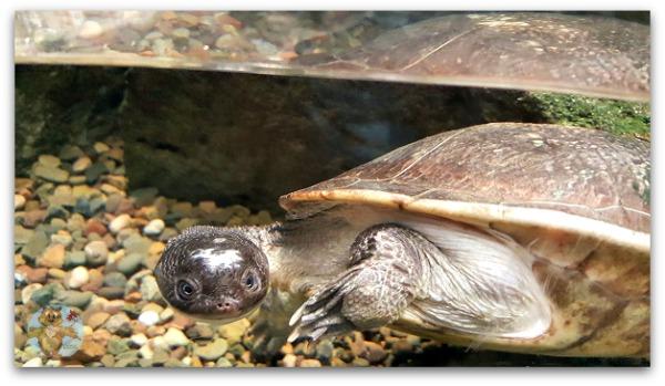 Reptiles Museum of Nature