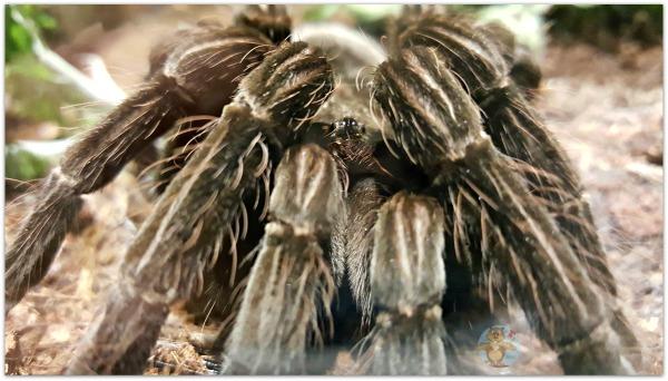 Tarantula Museum of Nature