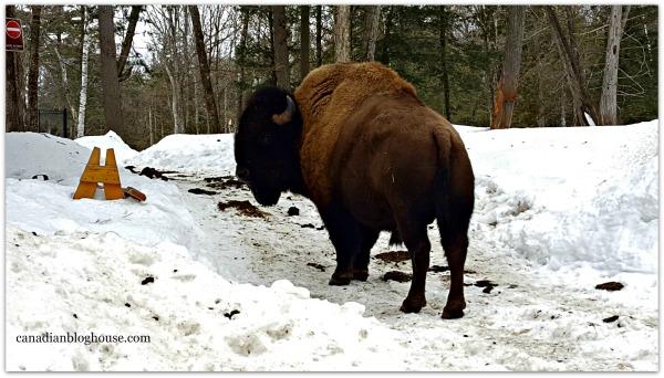 Bison Parc Omega
