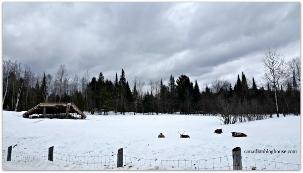 Caribou Parc Omega