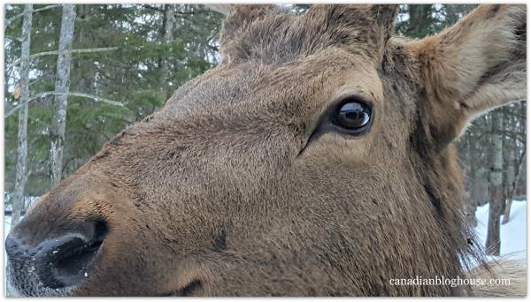 Deer Parc Omega