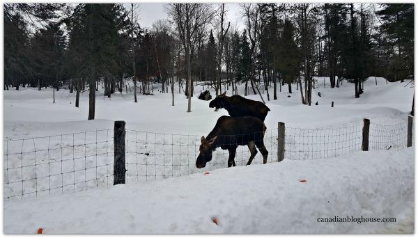 Moose Parc Omega