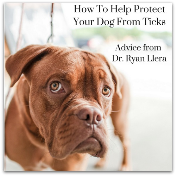 How To Help Protect Your Dog From Ticks Dr Ryan Llera