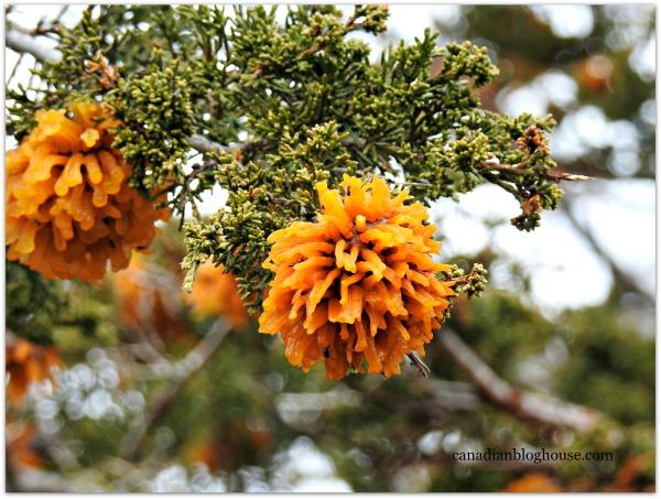 Orange Flowered Tree Prince Edward County