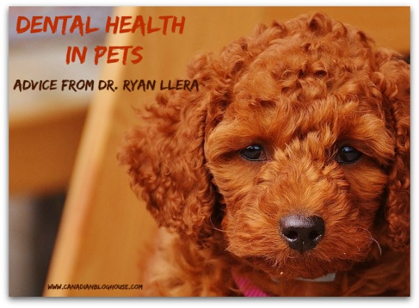 Dental Health Pets Dr Ryan Llera