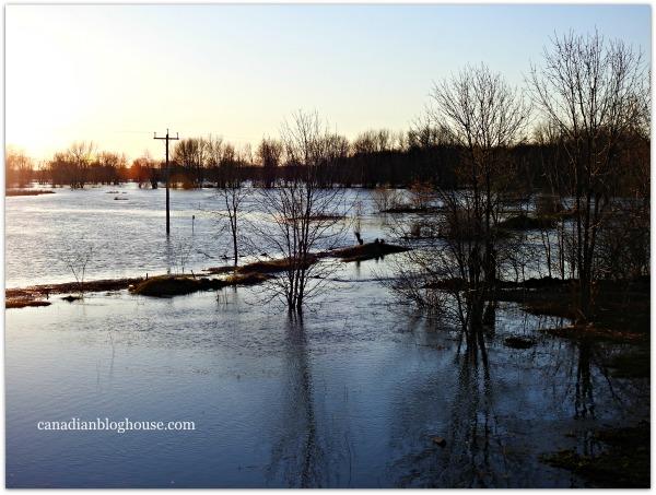 Petrie Island Flooding