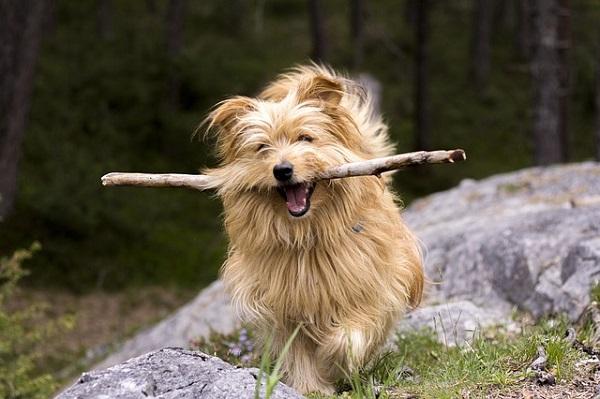 Rover.com Pet-Sitting