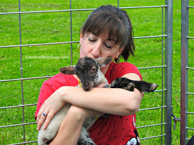 Cuddling a lamb at Topsy's Farms Ontario Road Trip Destination