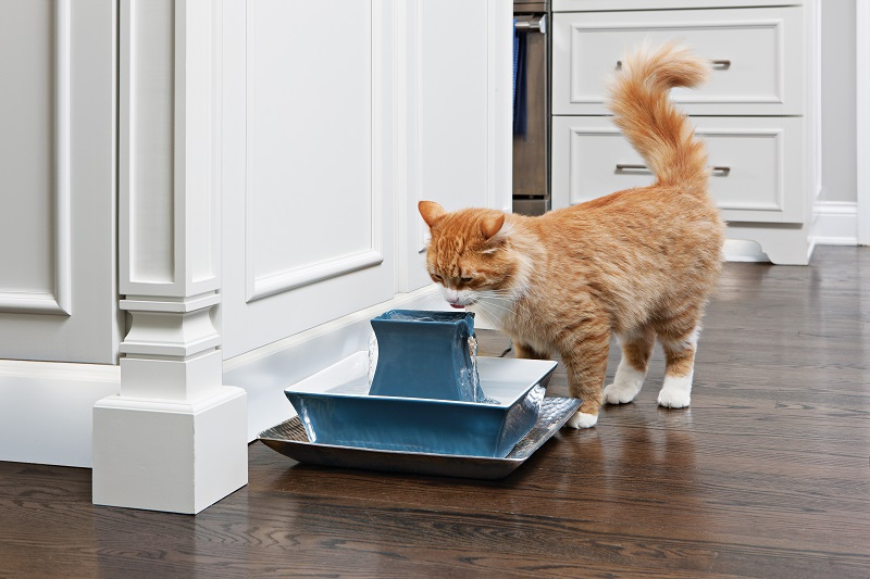 warning signs of pet dehydration pet cats