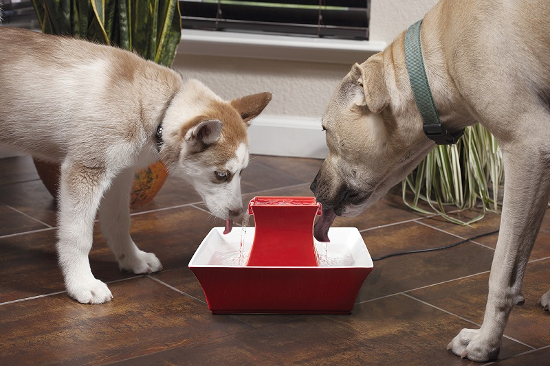 warning signs of pet dehydration pet dogs