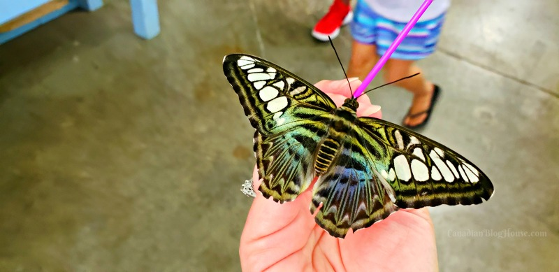 The Great New York State Fair Butterfly