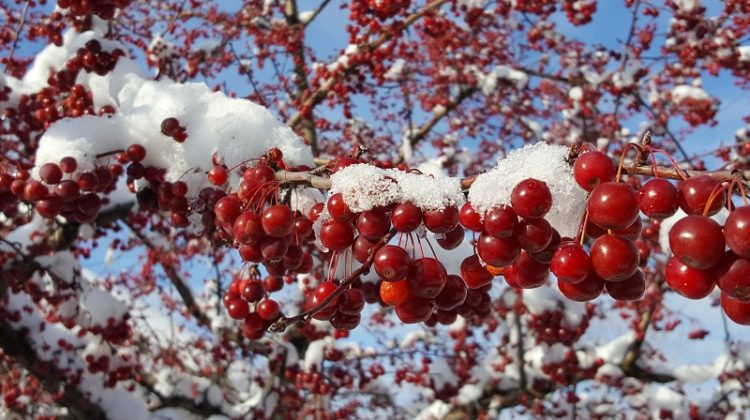 Red Berries Winter Snow Outdoor Winter Party