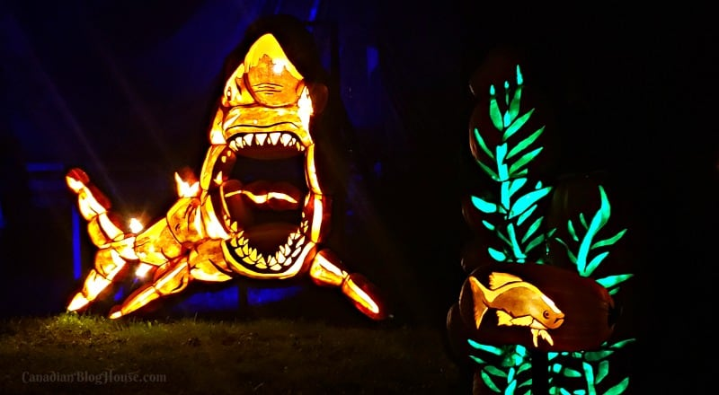 Pumpkinferno Handcrafted Pumpkins Shark