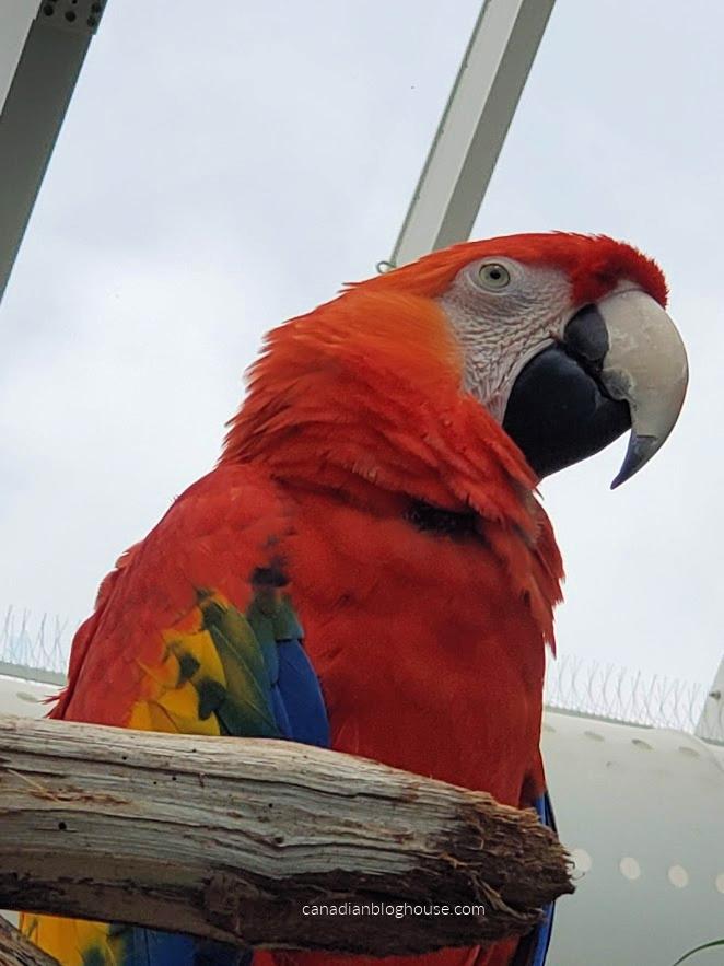 Closeup of Macaw at Texas State Aquarium